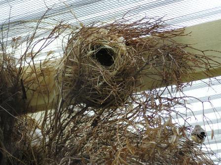 House finch nest box plans